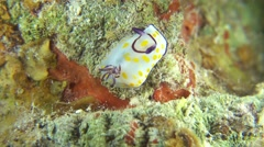 Vibrant Sea Slug on Coral Reef - stock footage