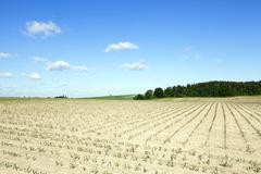 Corn field, summer Stock Photos