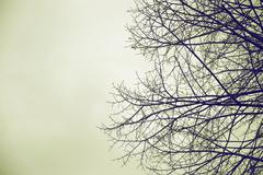 A leafless tree against a grey moody sky. Stock Photos