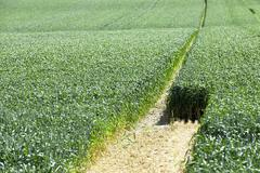 Photo agriculture, Europe Stock Photos
