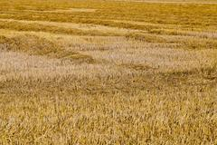 Harvesting cereals, Agriculture Stock Photos