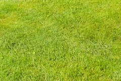 Vibrant grass - stock photo