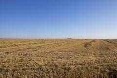 harvesting wheat, cereals - stock photo