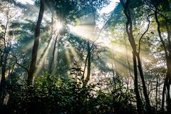 Sunrays passing through trees Stock Photos