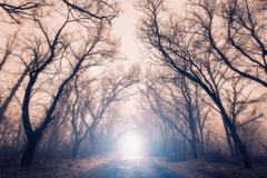 Scary mysterious forest with road in fog in autumn - stock photo