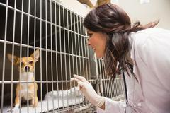 Veterinarian monitoring sick dog in cage at clinic Stock Photos