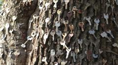 Many keys on tree trunk background Stock Footage