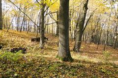 Autumn forest , Belarus Stock Photos