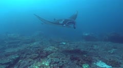 Manta rays (Manta blevirostris) from above Stock Footage