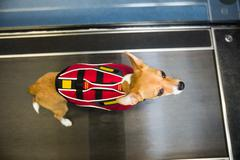 Dog on hydrotherapy treadmill in vets clinic Stock Photos