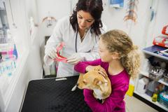 Veterinarian showing artificial dog teeth to the owner in clinic Stock Photos