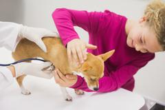 Girl petting her pet dog while vet examining in clinic Stock Photos