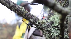 Lumberman cutting tree branch with chainsaw Stock Footage