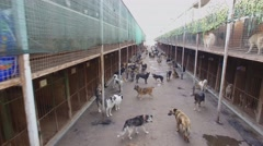 Lot of dogs are in asylum with rows of cages at autumn day Stock Footage
