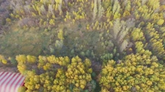 Trees with colourful foliage in national park on Elk Island Stock Footage