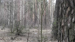 Baba Yaga Hide and Seek in the Forest. Show. - stock footage