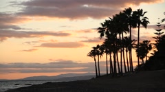 Palms at dawn near sea, Andalusia, Spain, beach, sunset Stock Footage