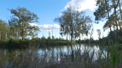 Beautiful lake and tall mossy trees on banks of swamp Stock Footage