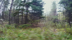 Forrest Driving Out Window Point of View Stock Footage