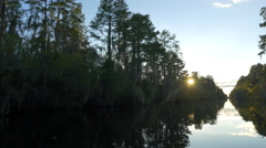 Sun shining through mossy trees in amazing wetlands swamp canal Stock Footage