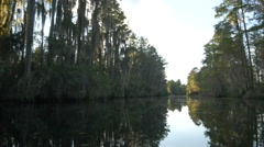 Sun shining through mossy trees in amazing wetlands swamp canal - stock footage
