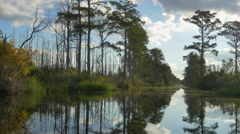 Amazing wetlands canal with tall mossy trees on swamp banks - stock footage