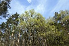 spring season Photo - stock photo