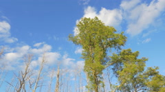Beautiful green cypress swamp trees in sunny wetlands Stock Footage