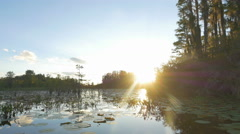 Amazing swamp wetlands at beautiful golden summer Stock Footage