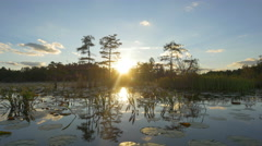 Amazing swamp wetlands at beautiful golden summer Stock Footage