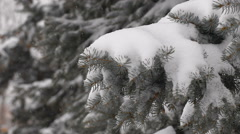 light snowfall. Snow Covered Pine Tree Branches - stock footage
