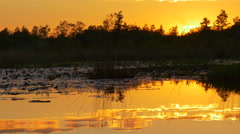 Amazing golden sky reflecting in glassy swamp water at sunset Stock Footage
