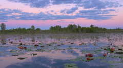 Gorgeous wetlands with mossy cypress swamp trees at pink sunrise - stock footage