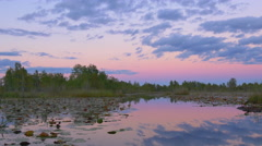 Gorgeous wetlands with mossy cypress swamp trees at pink sunrise Stock Footage