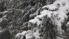 Man beats on snow-covered branch. Snow Covered Pine Tree Branches Stock Footage