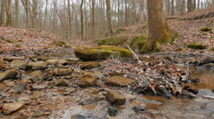 Stream Bed in Barren Empty Forest on Overcast Day Stock Footage