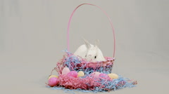 Bunny out of Basket Stock Footage