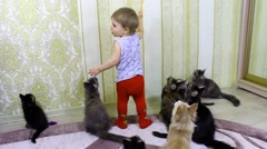 The child plays with cheerful cats Maine Coons Stock Footage