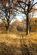 autumn season. Forest - stock photo