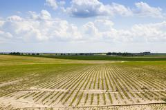 Agricultural field with beetroot Stock Photos