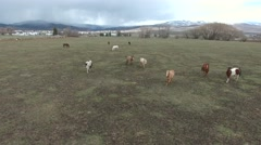 Aerial shot of beautiful horses trotting in field Stock Footage
