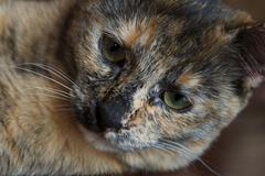 Brown cat close up - stock photo