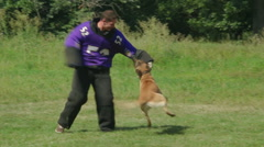 Police dog training to arrest the offender working with helper - stock footage