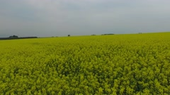 Aerial View Of A Blooming Oilseed Rape Field /01 Stock Footage