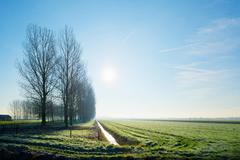 Meadows and ditch in backlight, Schalkwijk, Utrecht, The Netherlands Stock Photos