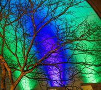 Detail of bare tree in front of green and blue illuminated building at night, Stock Photos