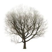 3D Illustration Ash Tree on White Stock Illustration