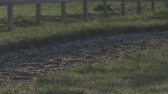 Slow Motion Horse Hooves Running on a Dirt Track - stock footage