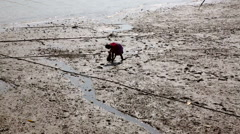 Asian woman gathering fish bait in river mud Stock Footage