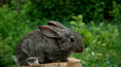 Rabbit. Feeding animal - stock footage